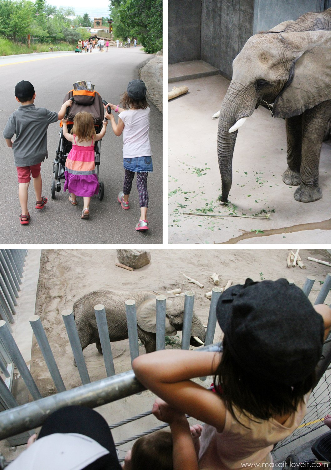 kids at zoo