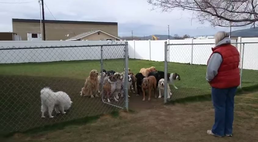 These dogs are impressive