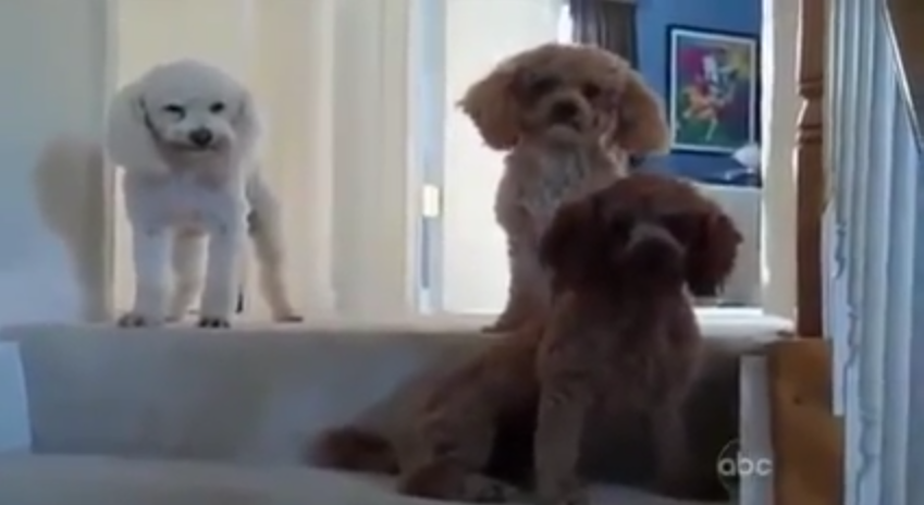 2 video of dogs tattling