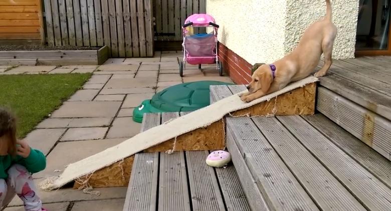 puppy slide