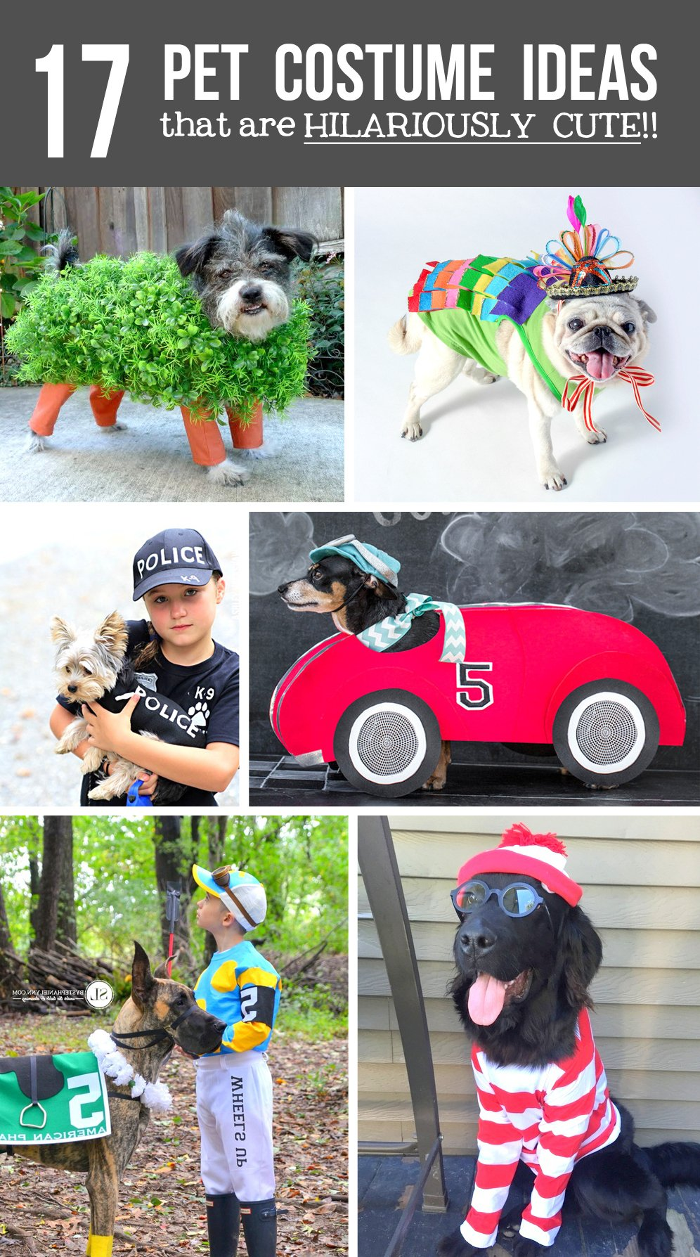 17 diy pet costume ideasthat are hilariously cute