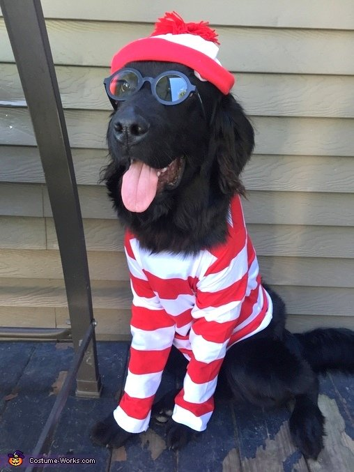 17 diy pet costume ideas that are hilariously cute whereswaldo2 save sparkly pinata dog costume solutioingenieria Image collections