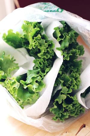 lettuce-paper-towel-e1444670172697